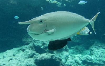 Okinawa Churaumi Aquarium, místo které musíte navštívit